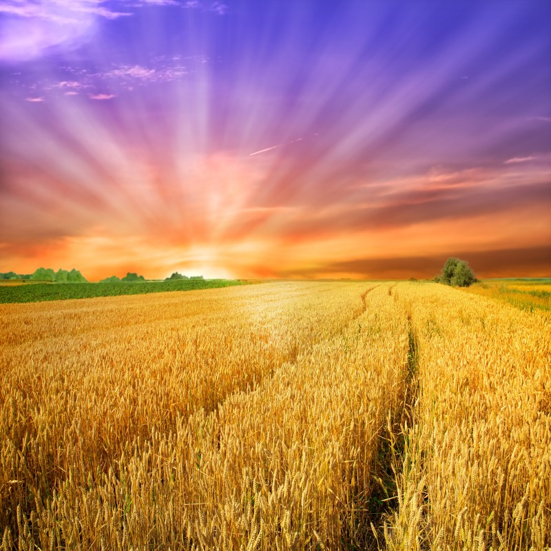 Amish Harvest - Ultra-Strong Fragrance Oil