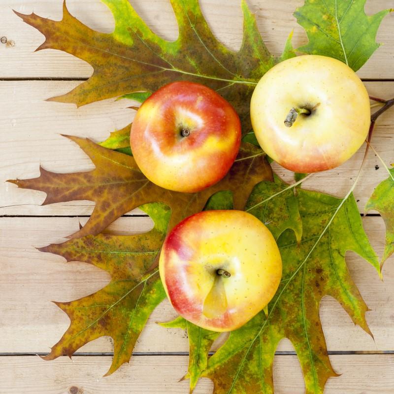 Apples 'N Oak - Ultra-Strong Fragrance Oil