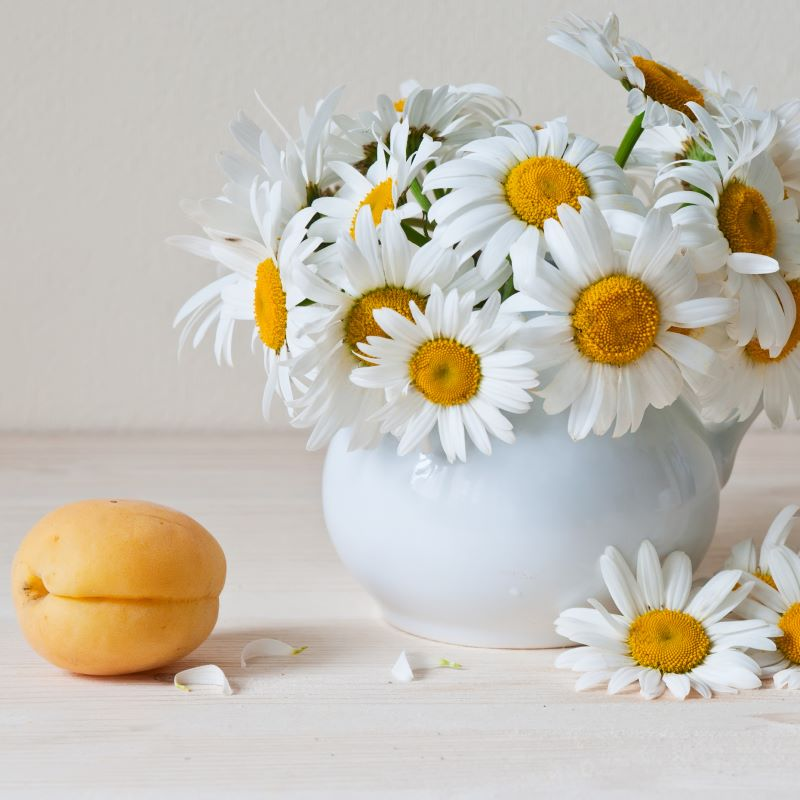 Apricot Chamomile - Ultra-Strong Fragrance Oil