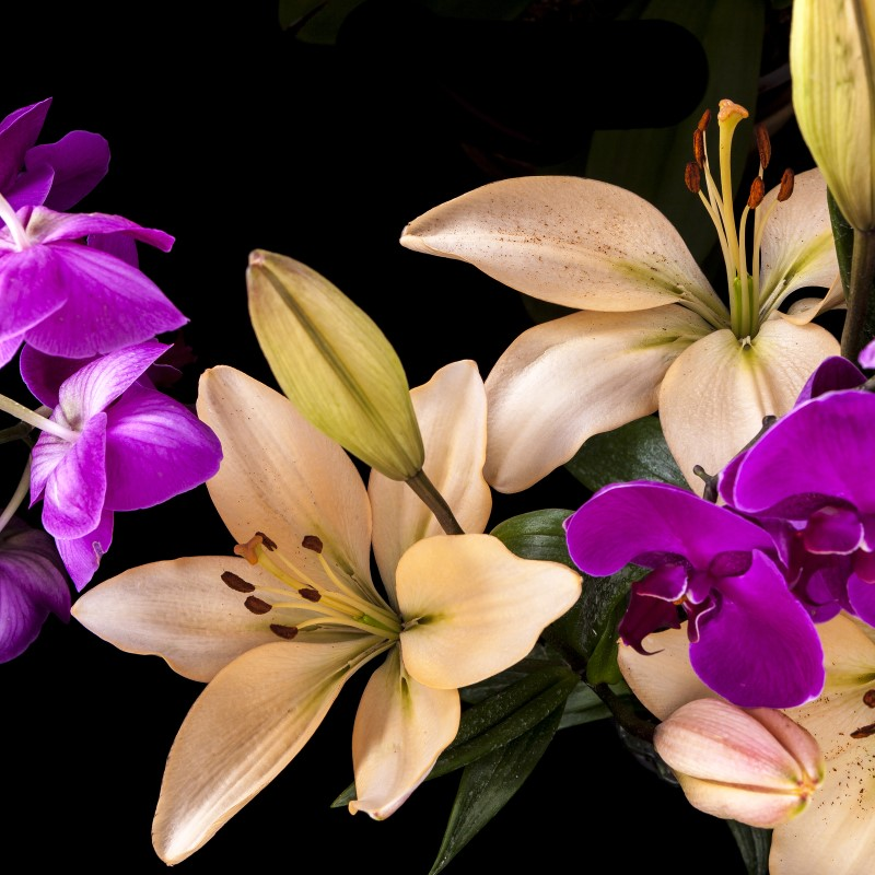 Black Orchid and Lily - Reed Diffuser Oil