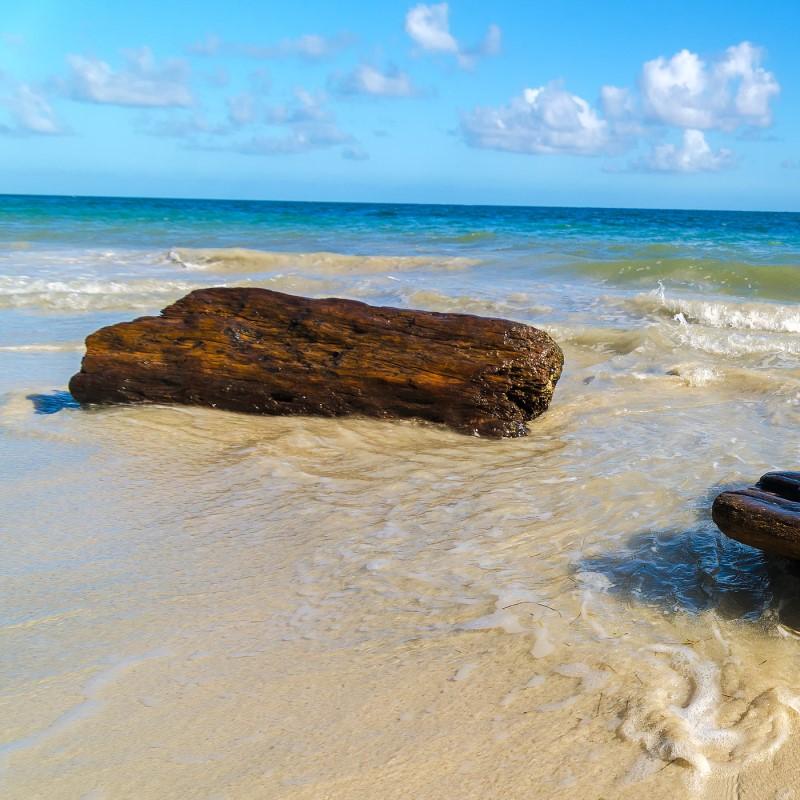 Caribbean Teakwood - Ultra-Strong Fragrance Oil