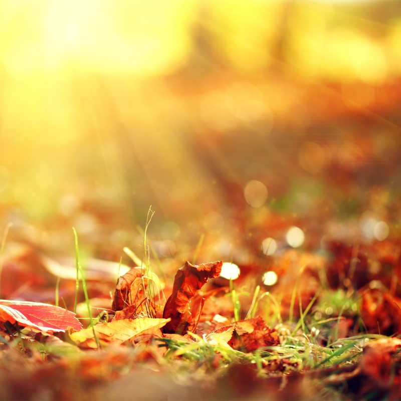 Crackling Autumn Harvest - Ultra-Strong Fragrance Oil