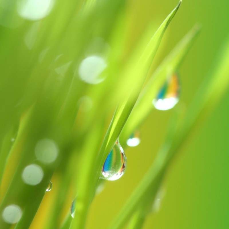 Dew Drops - Ultra-Strong Fragrance Oil