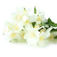 Jasmine - Ultra-Strong Fragrance Oil