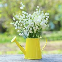 Lily of the Valley - Ultra-Strong Fragrance Oil