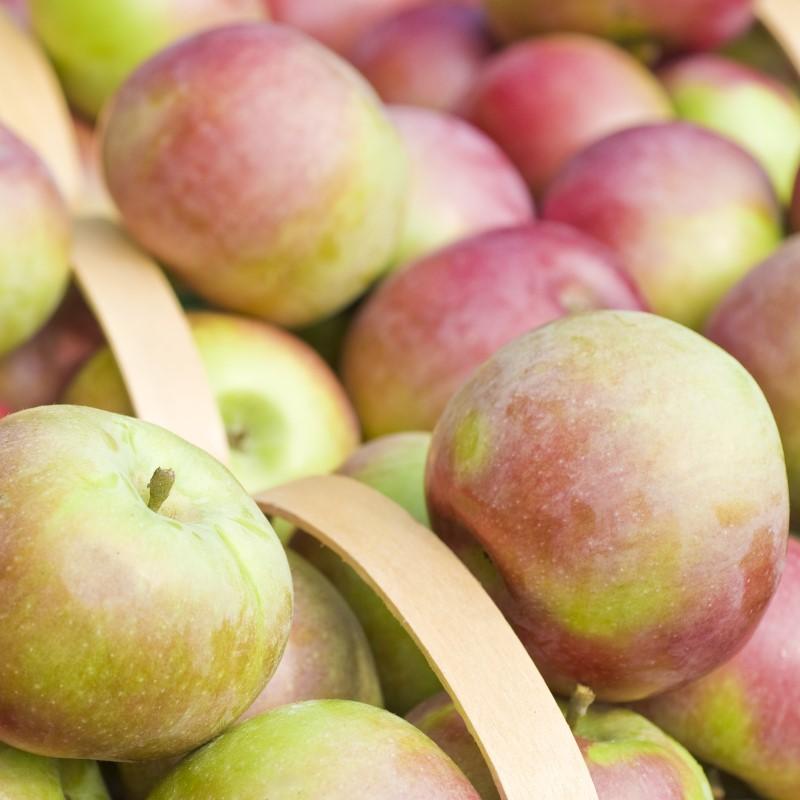 Macintosh Apple - Ultra-Strong Fragrance Oil