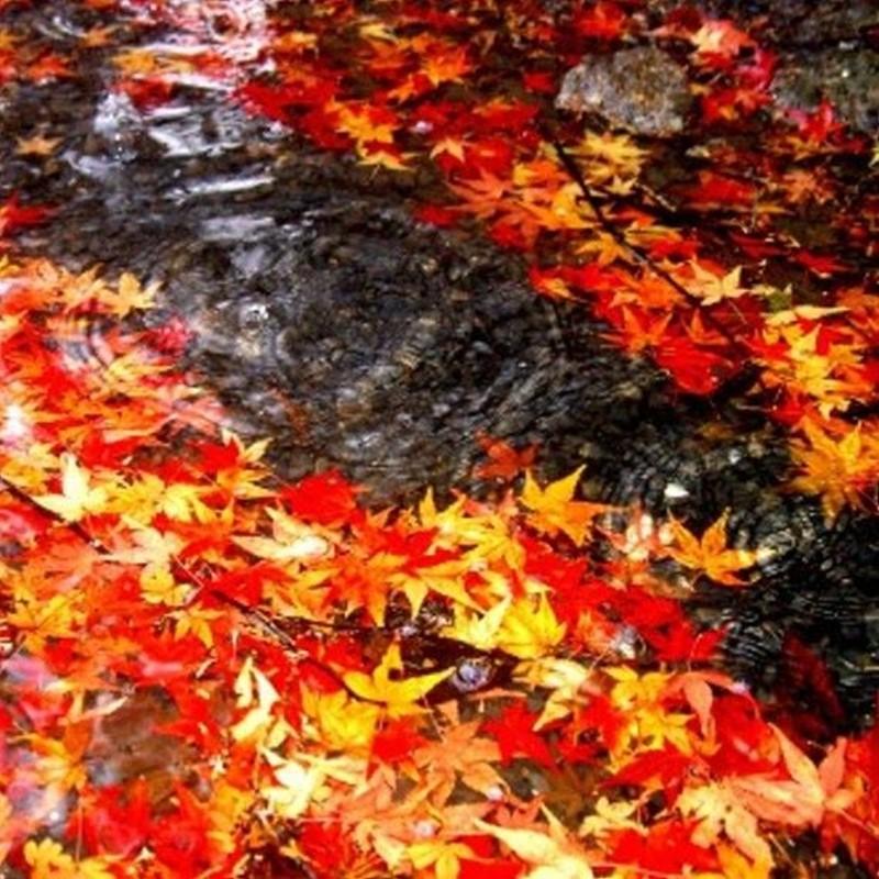 November Rain (Type) - Ultra-Strong Fragrance Oil
