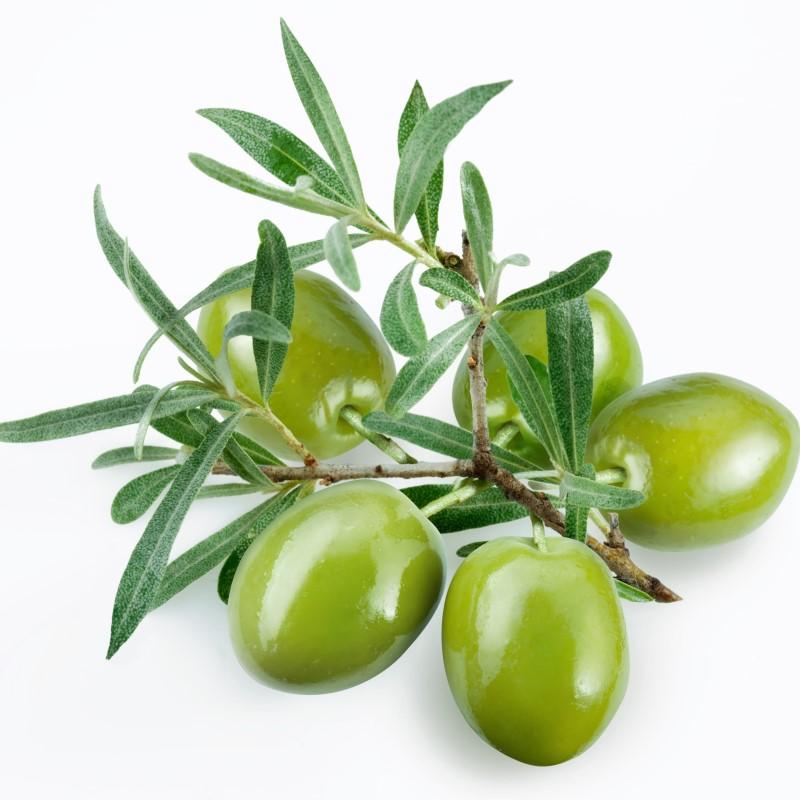 Olive Leaf - Ultra-Strong Fragrance Oil
