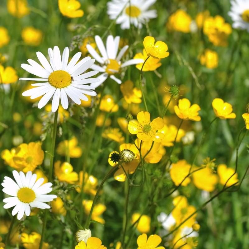 Prairie Flowers - Ultra-Strong Fragrance Oil