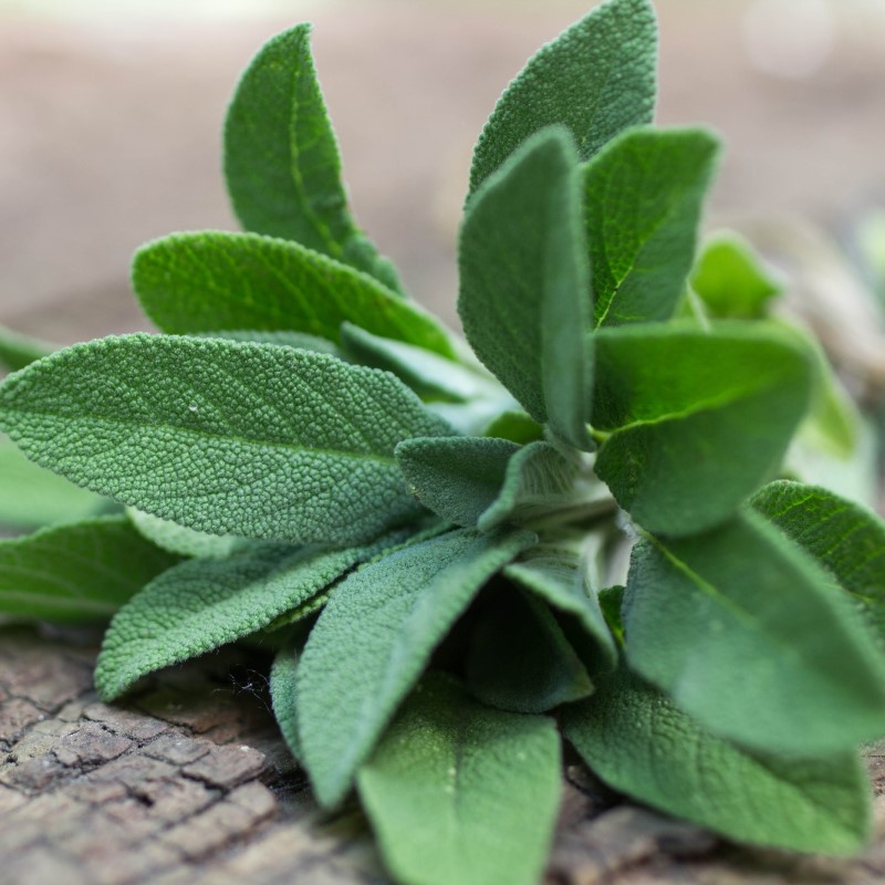 Sage - Ultra-Strong Fragrance Oil