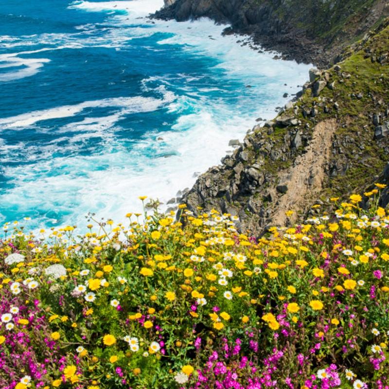 Sea Swept - Ultra-Strong Fragrance Oil