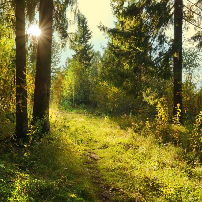 Walk in the Woods - Ultra-Strong Fragrance Oil