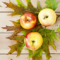SFO44-N - Apples N Oak - Soy Based Fragrance Oil