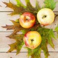 1oz Apples N Oak - Ultra-Strong Fragrance Oil