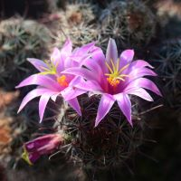 810364-N - Baja Cactus Blossom* (Type) - Ultra-Strong Fragrance Oil