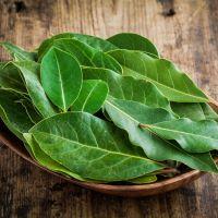 1oz Bay Leaves - Ultra-Strong Fragrance Oil