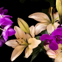 16oz Black Orchid Lily - Ultra-Strong Fragrance Oil