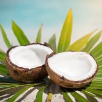1oz  Coconut Calypso - Ultra-Strong Fragrance oil