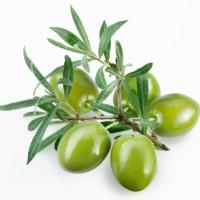 1oz Olive Leaf - Ultra-Strong Fragrance Oil
