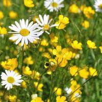 8oz Prairie Flowers - Ultra-Strong Fragrance Oil